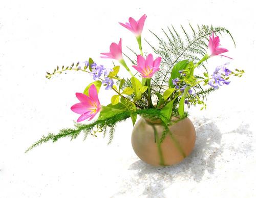 [フリー画像] 花・植物, 花瓶, 201008161900