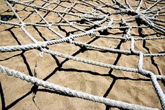 srongerthansteel (j@ys0n) Tags: zoo spider sand san francisco pentax web super rope sfzoo sanfranciscozoo 1645 40f k100d pentaxk100dsuper