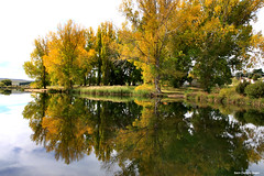 Dalgety Weir Reflections (Black Diamond Images) Tags: autumn lake colour reflection fall yellow reflections australia autumnleaves nsw monaro dalgety snowyriver australiangarden blackdiamondimages greatgardens australiangardens autumnexhibition dalgetyweir southernmonaro bestgardens