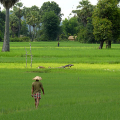 Ploughman walking home after work (B℮n) Tags: topf50 lowlands palmtrees dailylife agriculture laos paddyfields countrylife ploughman paceoflife donkhong 50faves ricefarming bamboohat walkinghomeafterwork wetricefields dailylifeinlaos 4000islandsinthemekong menplough menplow exploringdonkhongbybike farminginlaos ricecutivation greenricefields thefloodplainsofthemekongriver farmathome