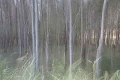 watercolours (< Nick Friend >) Tags: trees abstract blur painting pastel australia nsw watercolour spencer centralcoast panning bushland hawkesburyriver wisemansferry