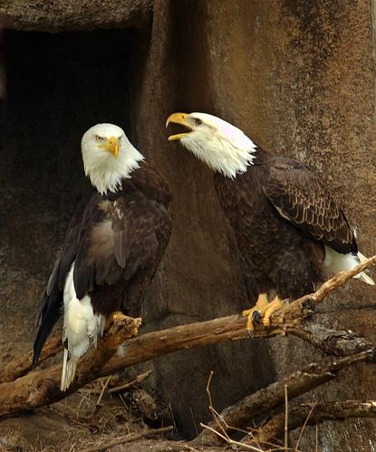 Eagles having a democratic conversation about reform.