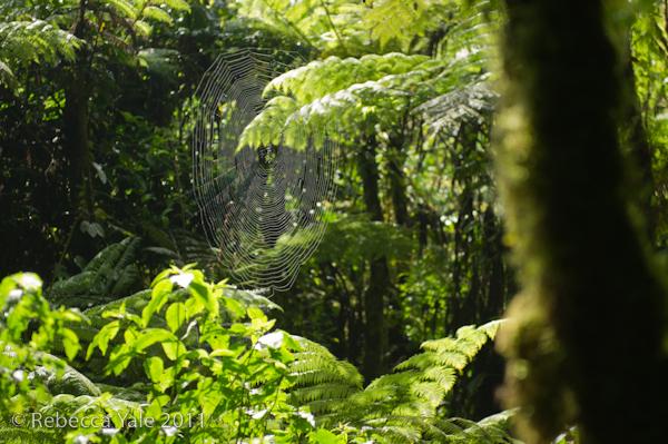 RYALE_Rwanda_Uganda_Safari-163