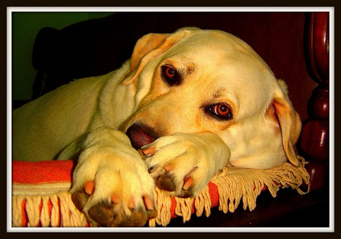 Signs Symptoms Of End Stage Kidney Failure In Dogs Cuteness