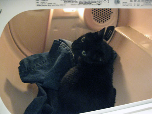 cat pooping on clothes