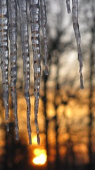 Icy cold sunrise (Rupert Pinkerton Bumbleford The 7th) Tags: morning winter ohio ice sunrise icicles citrit