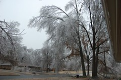 (laurienrick) Tags: ice nature icestorm damage arkansas naturaldisaster springdale january2009 icestorm2009
