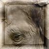 München - Tierpark Hellabrunn (RiesenFotos) Tags: animals munich bayern bavaria zoo tiere tierpark quadrat münchen hellabrunn riesenfotos