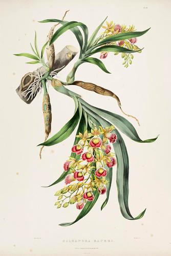 006- Orquideas de Mexico y Guatemala 6