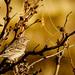 Baylor Canyon Bird