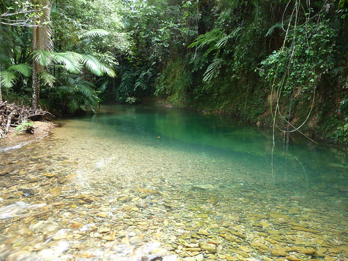 Daintree stream