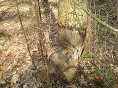 3 - Beaver Damage