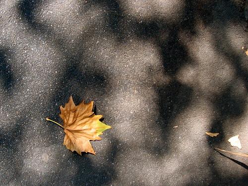11 March : leaf