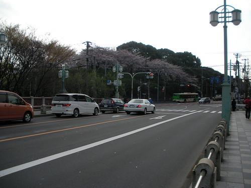 S君撮影:飛鳥山の桜