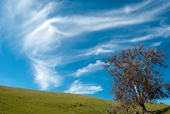 Tree against a marbled sky (Images by John 'K') Tags: blue sky cloud tree clouds spring photoaday april marbled 2009 sunol ebrpd johnk straightfromcamera blueribbonwinner sunolregionalwilderness ebparks colorphotoaward d40x rubyphotographer bnsarberscontest09 ebparksok johnkrzesinski randomok