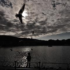 Summertime (aha42   tehaha) Tags: bergen 500x500 noreg norge norway people seagulls birds water h2o sky nikond40 silhouette sigma1020 squareformat explored worldsbestnikonshot boys flickrsbest nikoncapturenx2 tobox