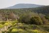 Mt. Meron as seen from the Maronite village at Baram_156 (Brian Negin) Tags: israel baram uppergalilee mtmeron