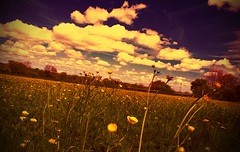 Buttercup Fields Forever (Jim McGovern Photography) Tags: flowers sky field clouds landscape buttercup fields buttercups filmeffect