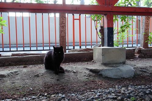 Today's Cat@20090512