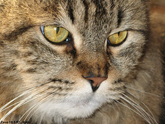 Zeus 18-5-07 (Karl70 Photos) Tags: cats cat chat zeus gato felino felini gatto gatti kater animali catsnamedzeus