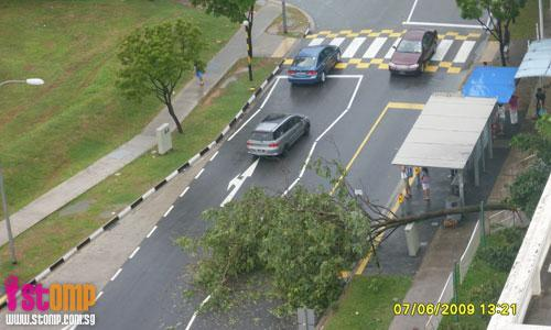 Tree falls at Woodlands, obstructing two way traffic flow