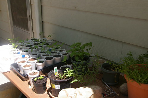 Seedling Table I