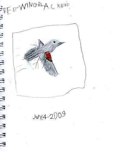 Red-Winged Blackbird by JDBoy (age 6)