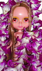 Daughter of Orchids