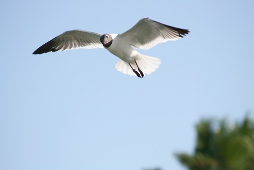 Sea bird in rockport tx