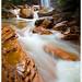 Douglas Falls - Tucker County, West Virginia