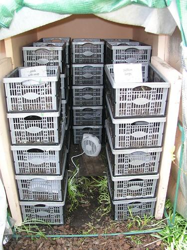 Winter storage area for begonias