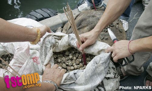 Don't release animals during Vesak, you're sending them to their deaths