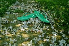 122.365 (erin.alyssa.) Tags: sun flower grass way petals nikon path days lilac flip flops 365 d3000