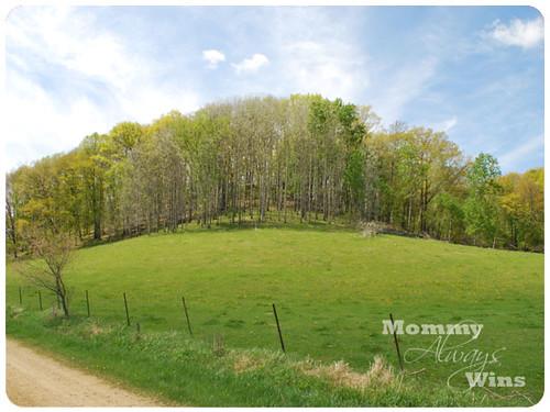hill w/trees