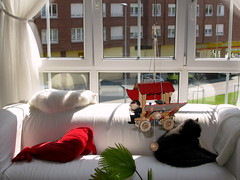 pongo, tina y musti (jacilluch) Tags: cats white blanco azul cat gris feline gray kitty gatos bleu sofa gato gata felino  gatti gat juguete gatoazul russianblue bluecats rusoazul whitebritishshorthair britanicodepelocortoblanco