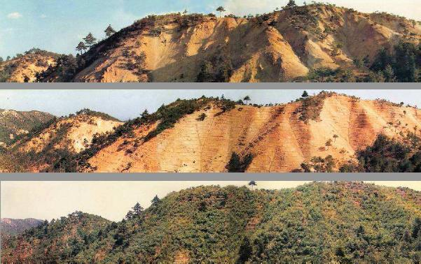 韓國有計畫的造林運動,使得不毛之地恢復成蓊鬱森林,防止土壤侵蝕繼續惡化;圖片來源:韓國山林廳