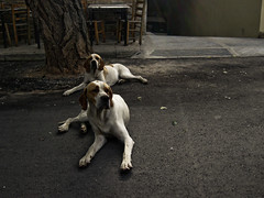 brothers (Fotis ...) Tags: street dogs brothers lookalike alwaystogether