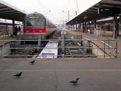 Tauben, zu Fuß, vor Regionalzug