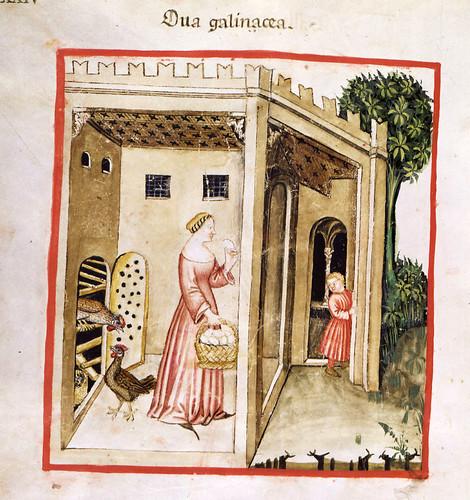 023- Aves de corral la gallina y los huevos-TACUINUM SANITATIS- Biblioteca Casanetense Ms. 4182