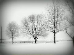 Southeastway Park Indianapolis Winter 2005 174 (Badger 23 / jezevec) Tags: 2005 schnee winter snow cold indianapolis hiver nieve sneeuw january freezing indiana neve invierno neige wonderland inverno  zima   20050108 winterwonderland   jezevec   snh    southeastway  southeastwaypark     lindiana