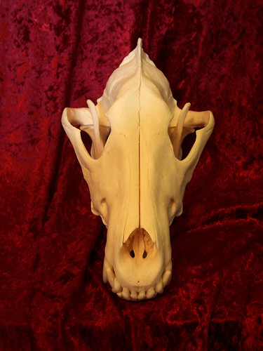 Bonebiter 01