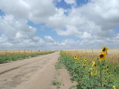 Summer on the Prairie (mishon_) Tags: wyoming blackeyedsusan countryroad