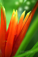 Fire Flower (anthonyserafin) Tags: beautysecret colorphotoaward