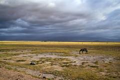Zebra (FranckJM) Tags: africa colour clouds kenya couleurs zebra nuages 2008 afrique masaimara zèbre sombres
