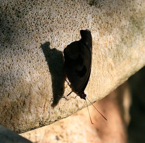 Butterfly Farm_24