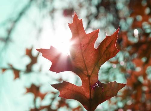 Autumn - by Michael Scott