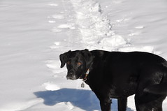 20090314_004_N_Powderface Photo