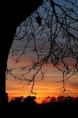 Idi di marzo (Xelisabetta) Tags: sunset red sky roma tree cielo albero rosso compleanno rami gianicolo altraromaromamor eos400d ididimarzo xelisabetta fotocolturepaesaggio elisabettagonzales settimana122009romamor