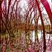 Flooded Woodland ~ Spring Has Arrived
