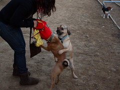 Gay Dog (Venessa Nina) Tags: park gay dog forest photography weird clothes queens nina queer outfits hump dogrun humping venessa fivefootmohawk venessaninaphotography